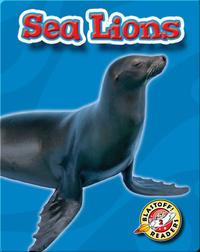 Sea Lions: Oceans Alive