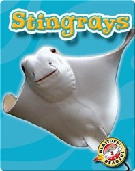 Stingrays: Oceans Alive