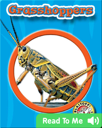 Grasshoppers: World of Insects