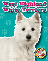 West Highland White Terriers: Dog Breeds