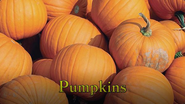 Pumpkins (Are My Favorite Fruit)