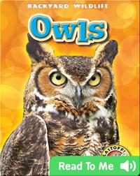 Owls: Backyard Wildlife