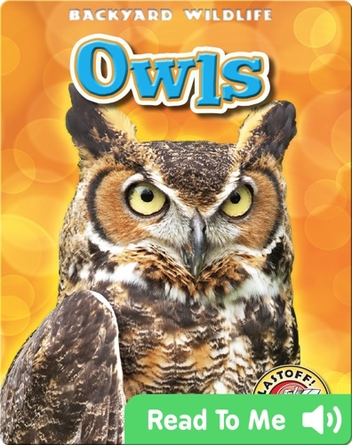Owls: Backyard Wildlife