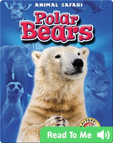 Polar Bears: Animal Safari