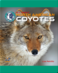 All About North American Coyotes