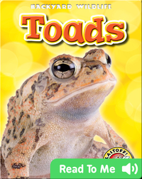 Toads: Backyard Wildlife
