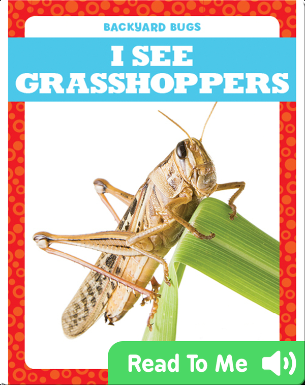 I See Grasshoppers