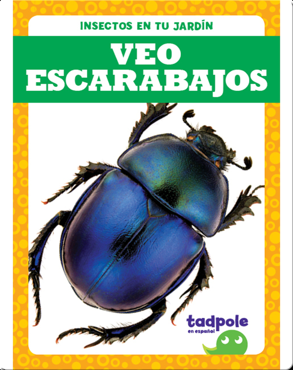 Insectos en tu jardín: Veo escarabajos
