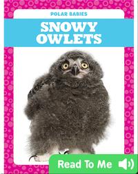 Polar Babies: Snowy Owlets