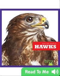 Raptor World: Hawks