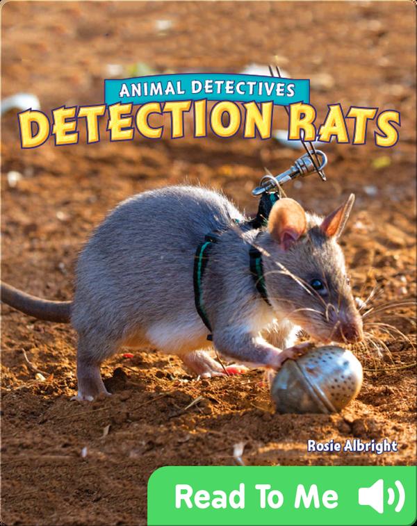 Detection Rats