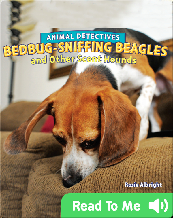 Bedbug-Sniffing Beagles and Other Scent Hounds
