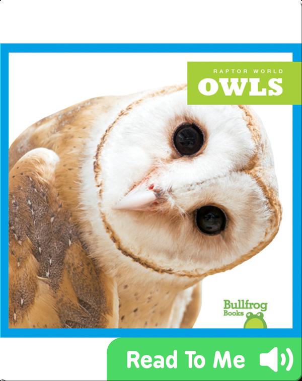 Raptor World: Owls