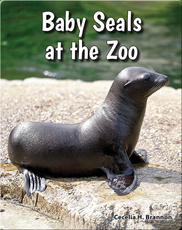 Baby Seals at the Zoo