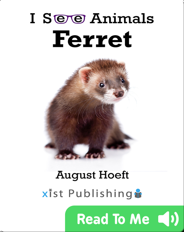 I See Animals: Ferret