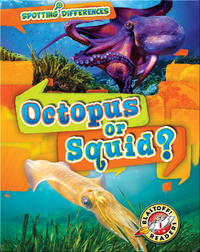 Spotting Differences: Octopus or Squid?