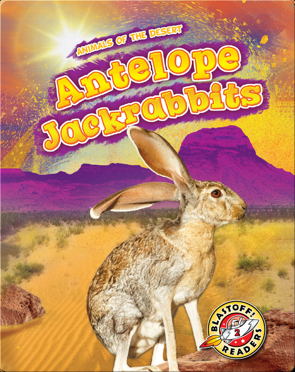 Animals of the Desert: Antelope Jackrabbits