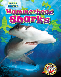 Shark Frenzy: Hammerhead Sharks
