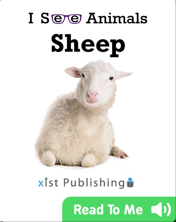 I See Animals: Sheep