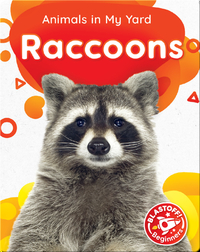Animals in My Yard: Raccoons