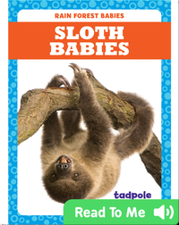 Rain Forest Babies: Sloth Babies