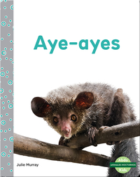 Animales nocturnos: Aye-Ayes