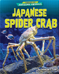 Awesome Animals: Japanese Spider Crab