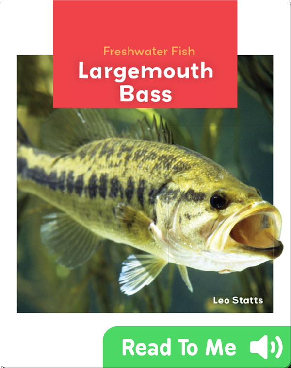 Freshwater Fish: Largemouth Bass