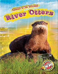 Animals of the Wetlands: River Otters