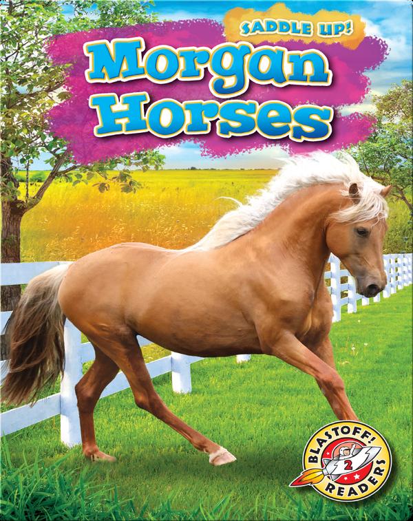 Saddle Up!: Morgan Horses