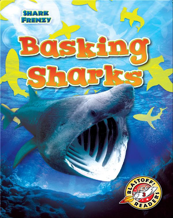 Shark Frenzy: Basking Sharks