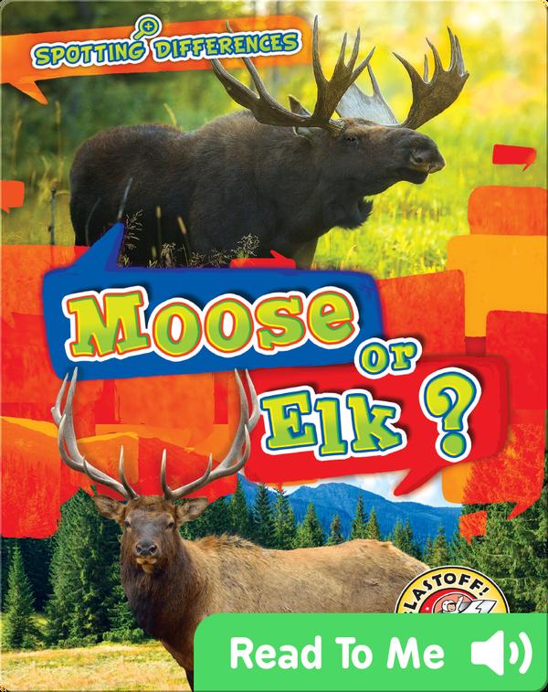 Spotting Differences: Moose or Elk?