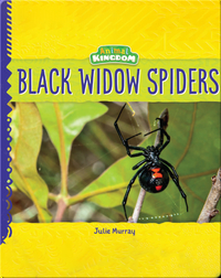 Animal Kingdom: Black Widow Spiders