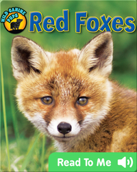 Red Foxes (Wild Canine Pups)