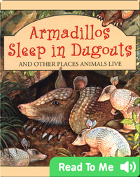 Armadillos Sleep In Dugouts And Other Places Animals Live