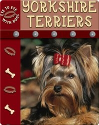 Eye To Eye With Dogs: Yorkshire Terriers