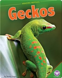 Amazing Reptiles: Geckos