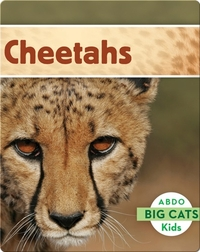 Big Cats: Cheetahs