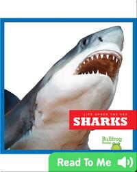 Life Under The Sea: Sharks