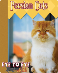 Eye To Eye With Cats: Persian Cats