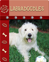 Eye To Eye With Dogs: Labradoodles