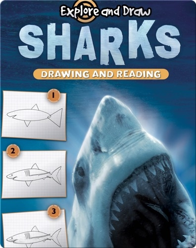 Explore And Draw: Sharks
