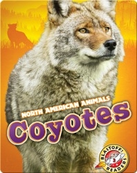 North American Animals: Coyotes