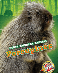 North American Animals: Porcupines