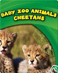 Baby Zoo Animals: Cheetahs