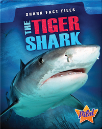 Shark Fact Files: The Tiger Shark