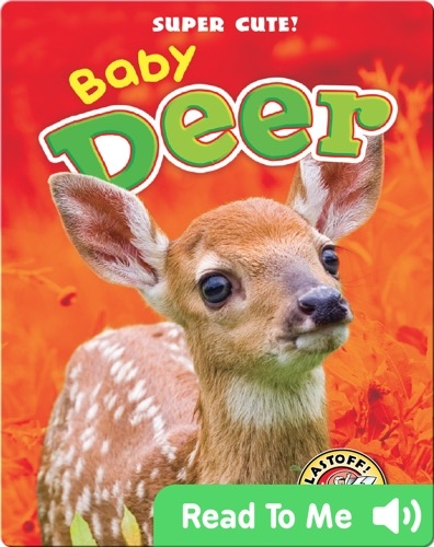 Super Cute! Baby Deer