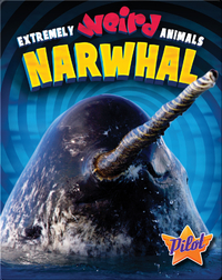 Extremely Weird Animals: Narwhal