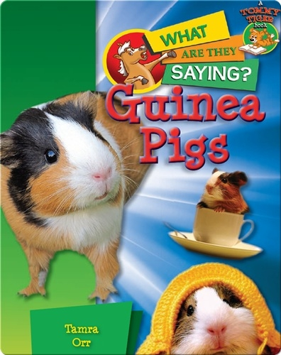 Guinea Pigs: What Are They Saying?