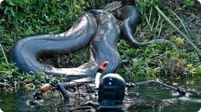 Diver Discovers Giant Anaconda